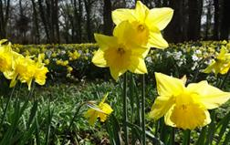 Explore Welbeck with family and friends this Easter